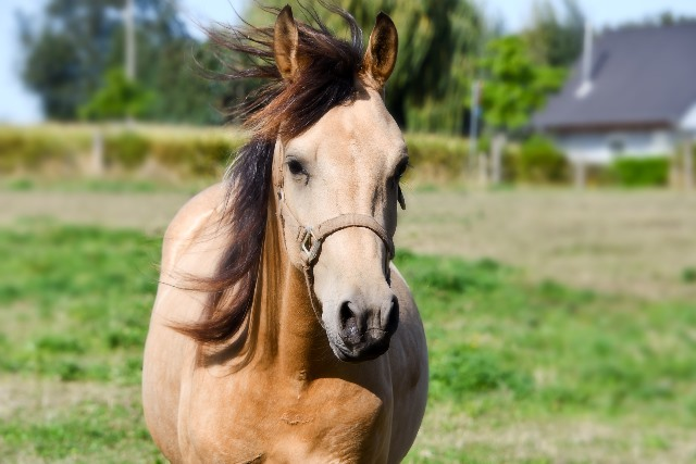 sejour-adapte-handi-equitation
