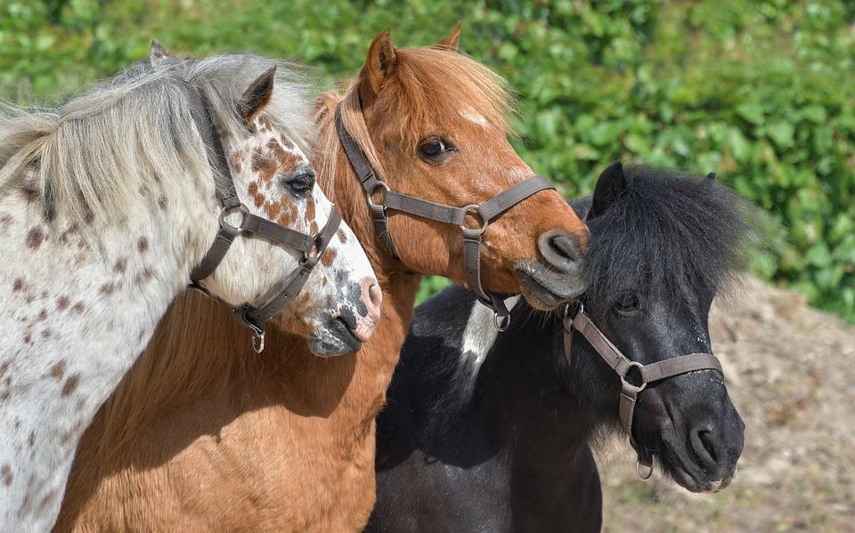 Equitation 12-17 ans